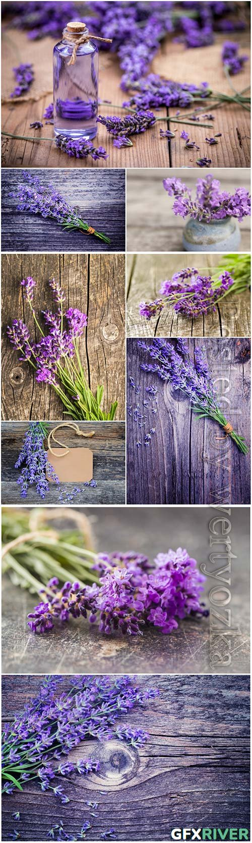 Fresh lavender flowers beautiful stock photo
